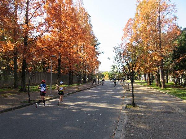 10.紅葉の道を歩く.jpg