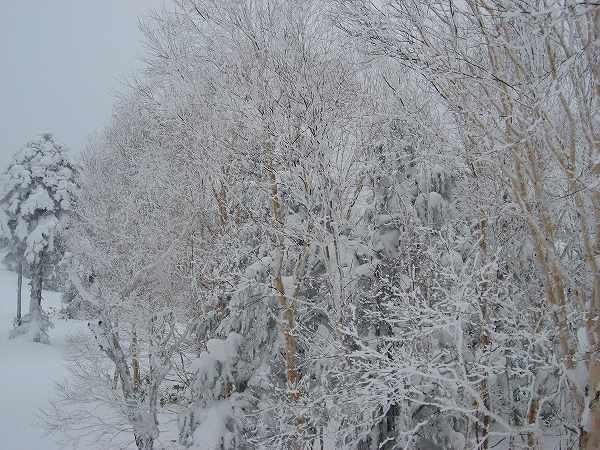 13.見事な樹氷.jpg