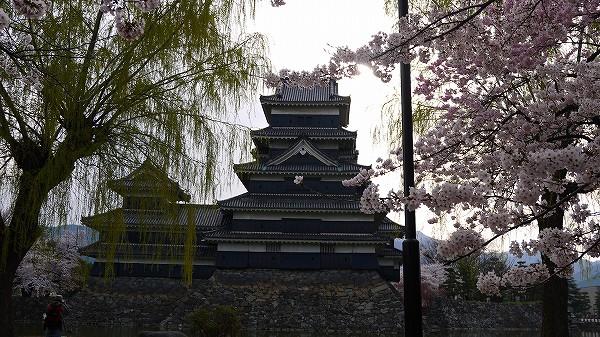 14.桜と柳と烏城.jpg