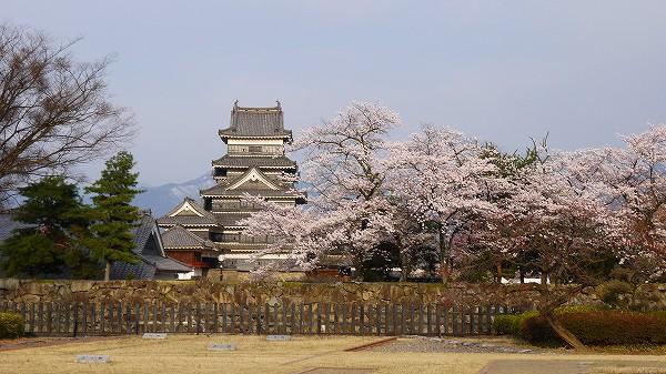 2.満開の桜の松本城.jpg
