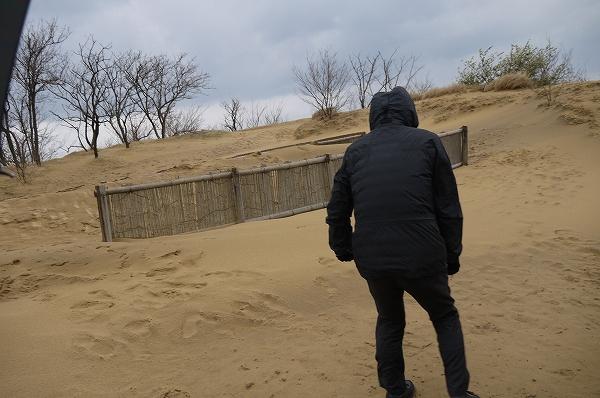 2.砂丘(2).jpg