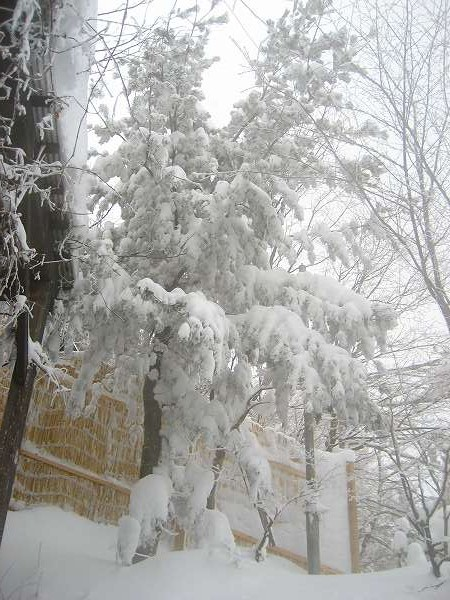 22.雪見露天.jpg
