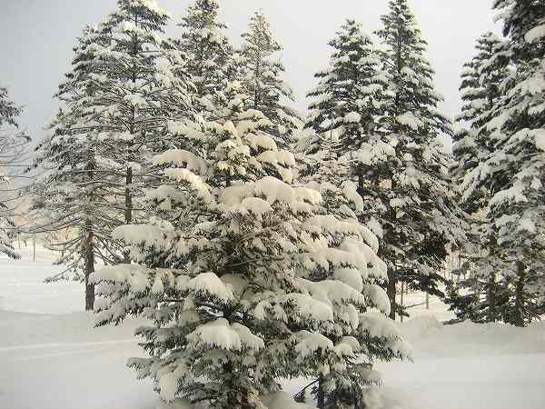 27.雪景色.jpg