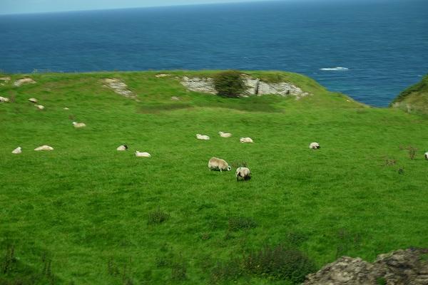 28.丸々と太った羊.jpg