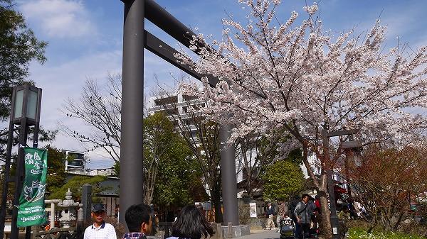 7.桜が満開!.jpg